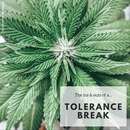 Tolerance Breaks